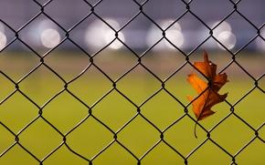 Picture sheet, glare, the fence, autumn, oak
