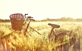 Picture wheat, field, the sun, nature, bike, background, Wallpaper, basket, mood, rye, wallpaper, ears, bicycle, Sunny ...