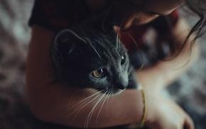 Picture animals, cat, look, girl, brunette, bracelet, cat, women, look, brunettes, filters, bracelet, filters