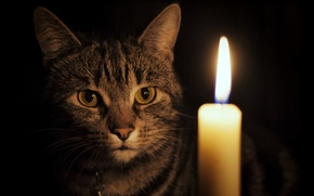 Picture cat, look, candle