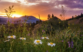 Wallpaper sunset, flowers, mountains, chamomile, meadow, Canada, Canada, British Columbia, British Columbia, Kootenay National Park, Kootenay ...