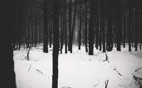Picture forest, forest, slenderman, slender, phyllium