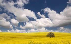 Picture clouds, yellow, tree, Field