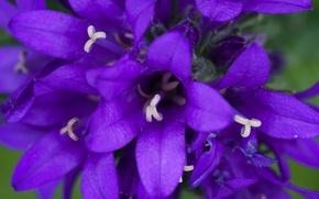 Picture flower, nature, macro, bokeh
