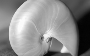 Picture close-up, b/W, shell