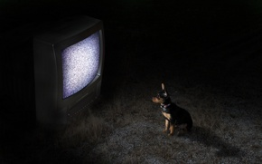 Picture night, dog, TV