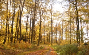 Picture autumn, forest, foliage, trail, forest, Autumn, leaves, path, fall