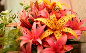 Picture flowers, Lily, bouquet