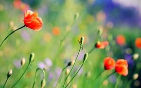 Wallpaper flowers, background, plants, bright, Wallpaper, glade, color, Maki, summer