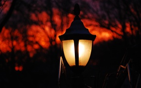 Picture the sky, trees, Park, lamp, the evening