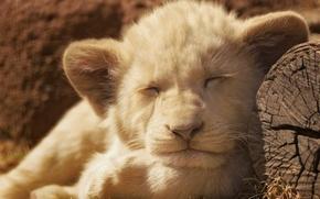 Picture Leo, lion, sleep