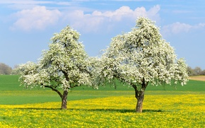 Picture trees, mood, spring, flowering