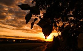 Picture Light, Clouds, Sun, Sunset, Autumn, Evening, Road, Leaves, Branch, Dusk