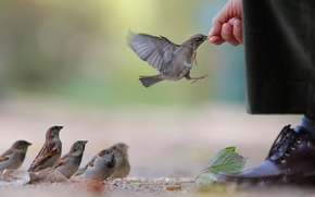 Picture sheet, food, hand, shoes, waiting, pants, sparrows