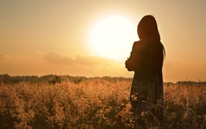 Picture field, flower, girl, the sun, sunset, flowers, loneliness, background, widescreen, Wallpaper, mood, woman, hair, calm, …