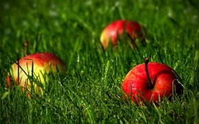 Picture grass, nature, apples