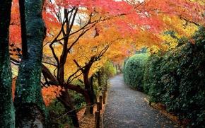 Wallpaper autumn, leaves, trees, Park, Japan, garden, track, the bushes