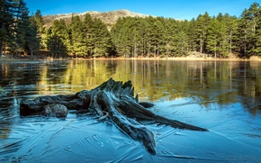 Picture forest, water, trees, lake, France, snag, Corsica