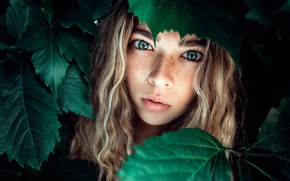 Picture leaves, girl, freckles, Sofia, Nastya Mel