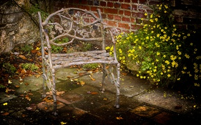 Picture flowers, chair, backyard