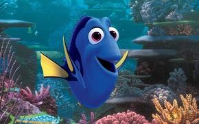 Picture colorful, cinema, Pixar, ocean, eyes, movie, animal, fish, film, tropical, reef, corals, tropical fish, Nemo, ...