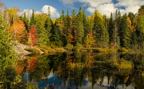 Picture autumn, forest, the sky, clouds, lake