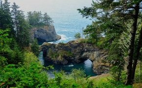 Picture forest, trees, the ocean, rocks, coast, slope, USA, the bushes, Oregon, Samuel H Boardman State …
