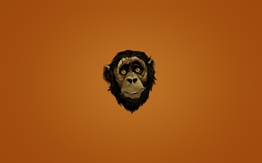 Wallpaper head, minimalism, look, monkey, dark background, face, monkey, face