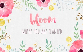 Picture flowers, background, paint, Maki, watercolor, the phrase, quote, inspiration, motivation, color, bloom