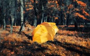 Picture Treatment, Autumn, Forest, Umbrella, Fall, Autumn, Yellow, Umbrella