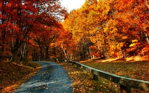 Picture road, autumn, forest, leaves, trees, nature, Park, colors, colorful, forest, road, trees, nature, park, autumn, ...