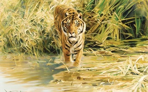Wallpaper tiger, figure, painting, Tiger, Donald Grant