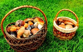Picture summer, grass, mushrooms, white, basket, aspen, boletus