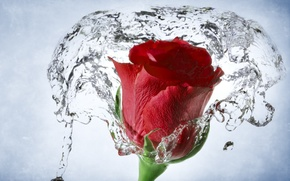 Picture water, macro, rose, Bud