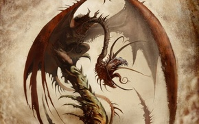 Picture dragon, wings, monster
