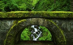 Wallpaper green, bridge, thickets, nature