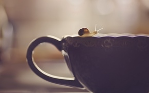 Picture background, snail, Cup