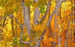 Picture Fall, Trees, Autumn Colors