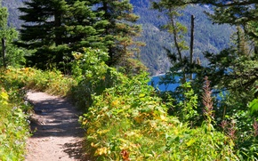 Picture forest, nature, trail, mountain lake, Path overlooking Bertha Lake in Waterton Lakes National Park