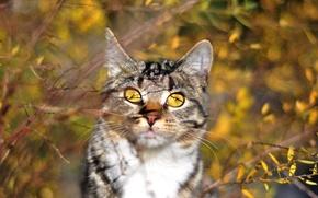 Picture autumn, cat, cat, pose