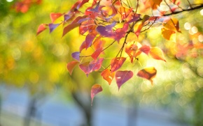 Picture leaves, glare, branch, autumn