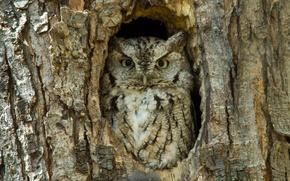 Picture tree, bird, bark, Sunny, owl, the hollow