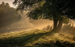 Picture trees, nature, fog, morning