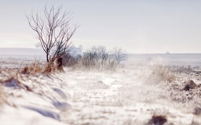 Picture winter, field, snow, trees, branches, nature, tree