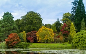 Picture autumn, forest, the sky, trees, pond, Park