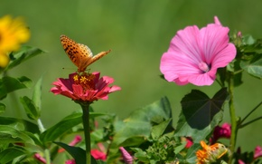 Picture flowers, butterfly, plant, wings, petals, insect, moth