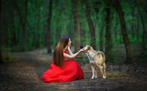 Picture forest, girl, dog, friendship, red dress