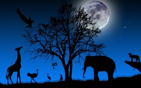 Picture TREE, The SKY, NIGHT, The MOON, STARS, BRANCHES, ELEPHANT, SNAKE, BIRDS, SHADOW, ANIMALS, SILHOUETTES, LANDSCAPE, ...