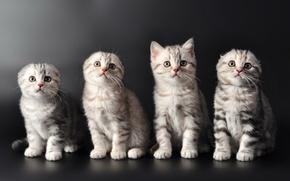 Picture cats, kittens, cute