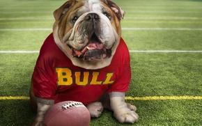 Picture Football, The ball, Bulldog